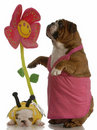 Spring time puppy Royalty Free Stock Image