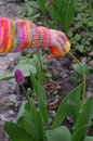 Spring touch a child's hand touching an orange tulip Stock Photo
