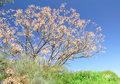 Spring tree. Royalty Free Stock Photos
