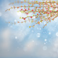 Spring tree with pink flowers cherry on blue sky background Stock Photos