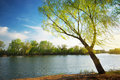 Spring tree on river Stock Image