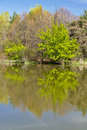 Spring treee reflection in a pond of water tree city park Royalty Free Stock Image
