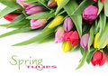 Spring tulip flowers Stock Photos