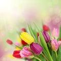 Jar tulipán kvety