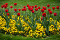 Spring tulip flowers in the park Stock Image