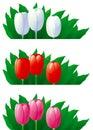 Spring tulips 免版税库存图片