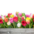Spring tulips flowers with copy space for your message Royalty Free Stock Photos