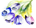 Spring tulips flowers watercolor illustration Stock Photos