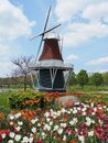 Spring tulips in front of miniature windmill Holland Michigan Royalty Free Stock Photo