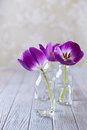 Spring tulips in glass bottles still life with purple Royalty Free Stock Photos