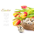 Spring tulips and nest with eggs Royalty Free Stock Images