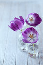 Spring tulips purple in glass bottles Royalty Free Stock Photo