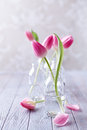 Spring tulips still life with pink in glass bottles Royalty Free Stock Image