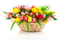 Spring tulips in wooden basket on white background happy mothers day romantic still life fresh flowers Stock Images