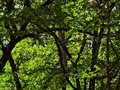 Trees and green in the woods Royalty Free Stock Photo