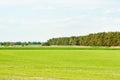 Spring  ukrainian Landscape Royalty Free Stock Photography