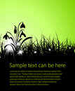 Spring vector grass background Royalty Free Stock Photography