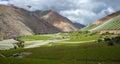 Spring Vineyard. Elqui Valley, Andes part of Atacama Royalty Free Stock Photo