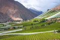 Spring Vineyard. Elqui Valley, Andes Royalty Free Stock Photo