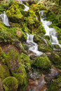 Spring water flows from the mossy rocks