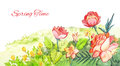 Spring watercolor footer. Red flowers drawing with watercolor pa