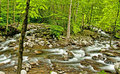 Spring and white water in The Great Smoky Mountains. HDR Royalty Free Stock Photo