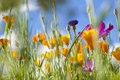 Spring Wild Flowers Royalty Free Stock Photo