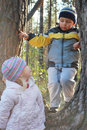 In the spring woods with a girl playing a boy climbed pine tree Stock Photos