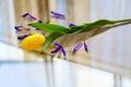 Spring yellow tulip Royalty Free Stock Photo
