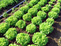 Springtame vegetables Royalty Free Stock Image