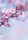 Springtime Blooming Tree Backg...