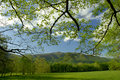 Springtime in cades cove of great smoky mountains tennessee usa may the early spring the the scenery is beautiful and a draw as a Royalty Free Stock Photography