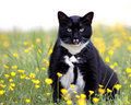 Springtime Cat Stock Image