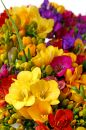 Springtime colorful flowers Stock Photos