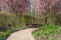 Springtime in garden stone walkway winding its way through a flowering Stock Photography