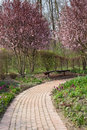 Springtime in garden stone walkway winding its way through a flowering Stock Image