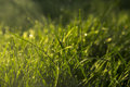 Springtime grass dew wet green sun in spring morning white Stock Photo