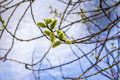Springtime an image of a tree in the park at Royalty Free Stock Photo