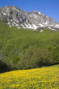 Springtime in mountains ligurian part of italian alps Royalty Free Stock Photo