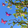 Springtime nature blossoming fruit tree and butterflies against blue sky glitter sparkle Royalty Free Stock Image