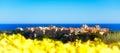 A Springtime Panoramic View Of...