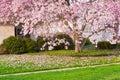 Springtime pink magnolia blossom on ground Stock Photos