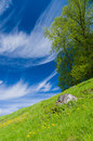 Springtime tree on the flowering meadow hillside under blue sky Royalty Free Stock Photo
