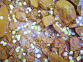 Sprinkle of Aspen leaves Stock Image