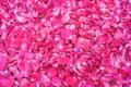 Sprinkled fresh pink rose petals Royalty Free Stock Photo