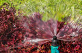 Sprinkler head showing radius of water droplets for bush and lawn watering Royalty Free Stock Photo