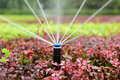 Sprinkler irrigation Royalty Free Stock Photo