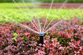 Sprinkler irrigation Royalty Free Stock Photo