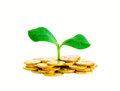 Sprout in coins isolated Royalty Free Stock Photography