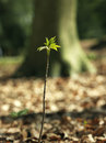 Sprout in the forest sunlight Royalty Free Stock Photos